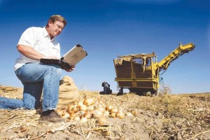 ASSOCIATED PRESS This file photo shows Bob Hale, owner of American Onion, using a laptop with wireless capabilities from a remote, rural site at his onion fields in Hermiston, Ore, in 2005. Even as the most developed cities in the nation struggle with whether to offer free Wi-Fi access, one of the most rural counties in the nation has succeeded in creating the world's largest hot spot, a Wi-Fi cloud that stretches over the wide open landscape in Umatilla County. Hale says he can photograph onions and send realtime pictures to customers from the field to show the quality of the product.
